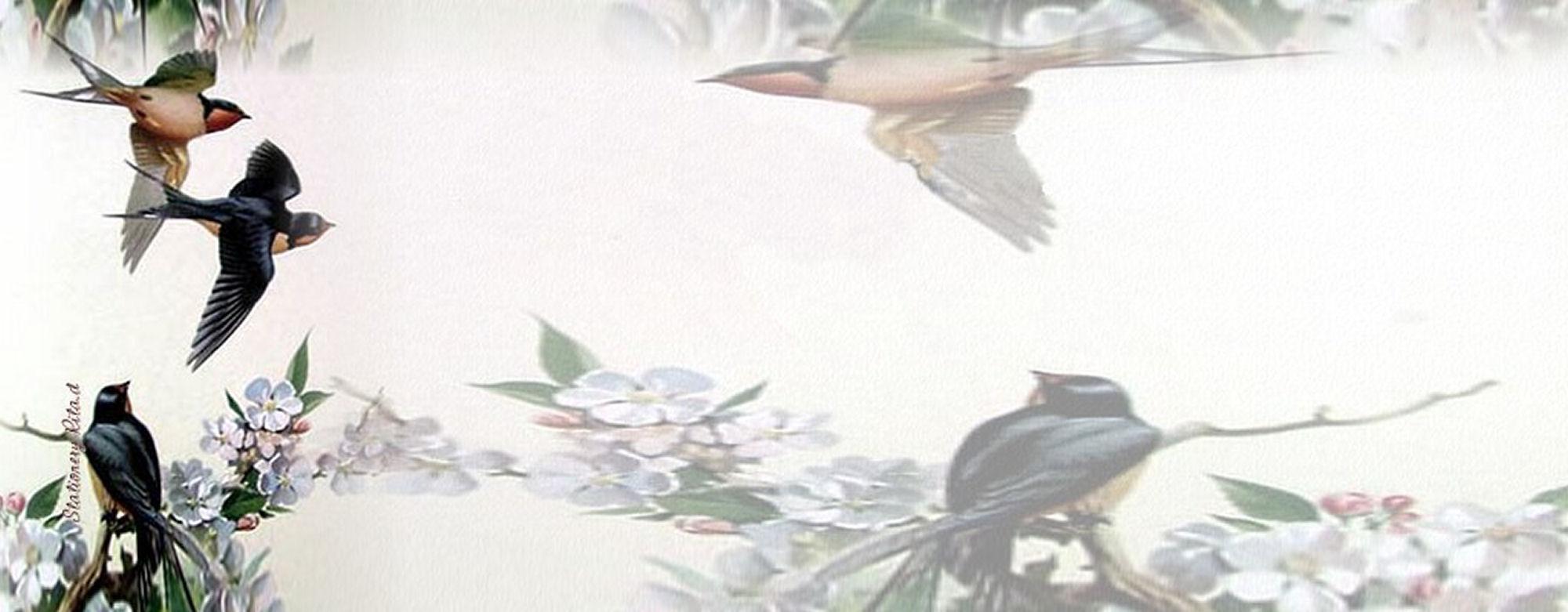 Fondo IM aves_006.imf