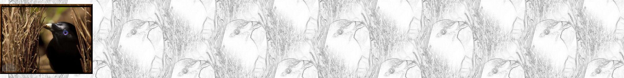 Fondo IM aves_036.imf