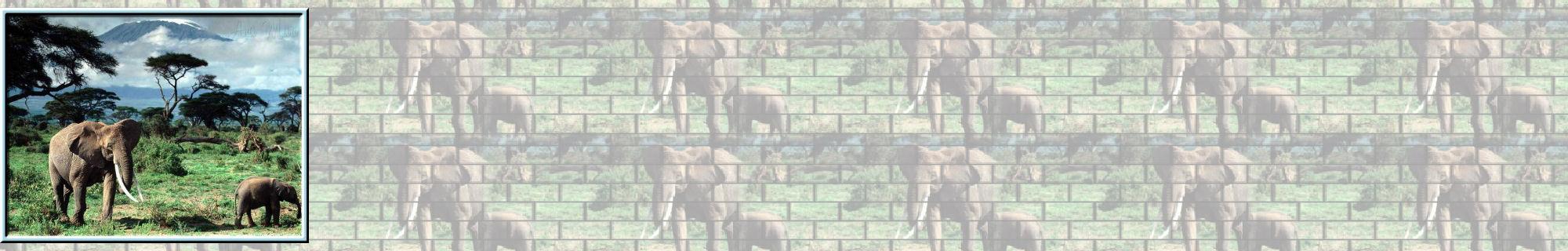 Fondo IM elefantes_002.imf