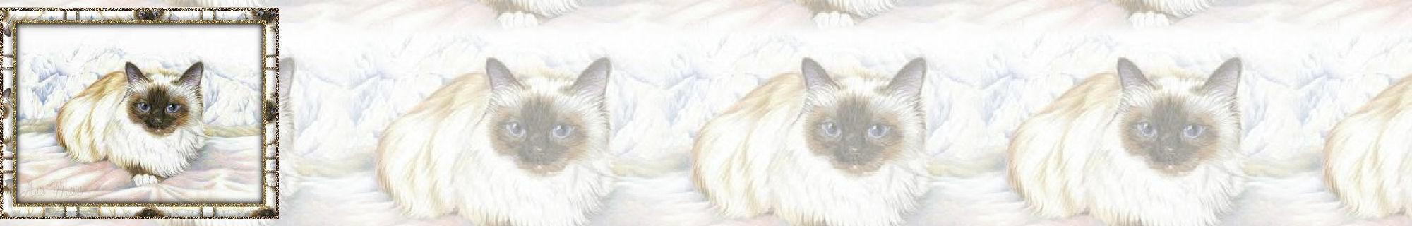Fondo IM gatos_018.imf