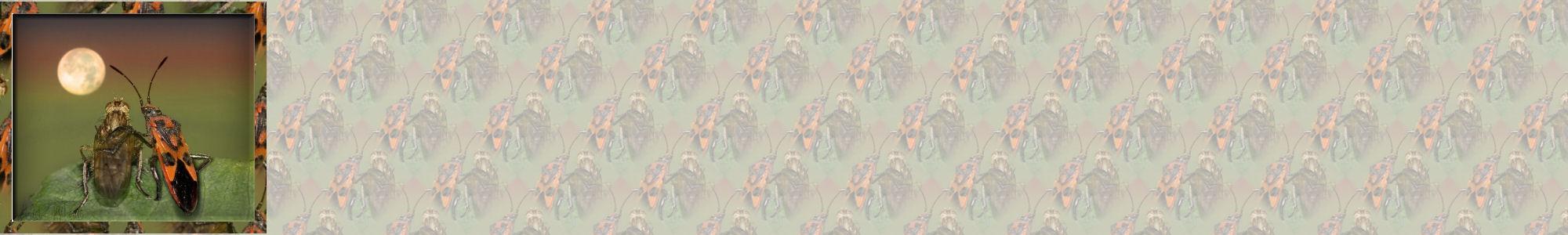 Fondo IM insectos_004.imf