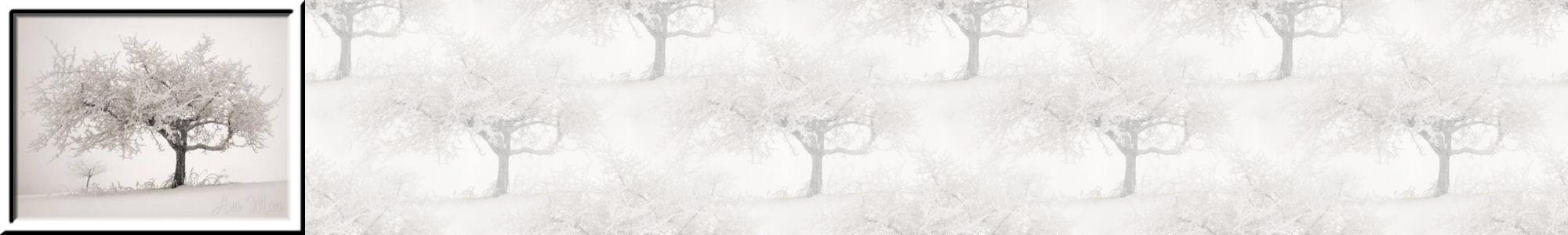 Fondo IM campos_nieve_dia_003.imf